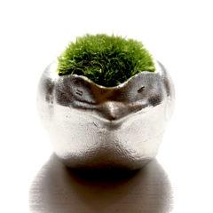 能作の苔盆栽